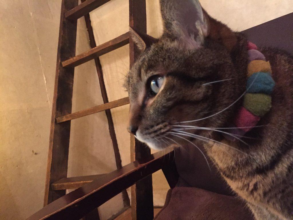 旧ヤム邸 猫 太郎4