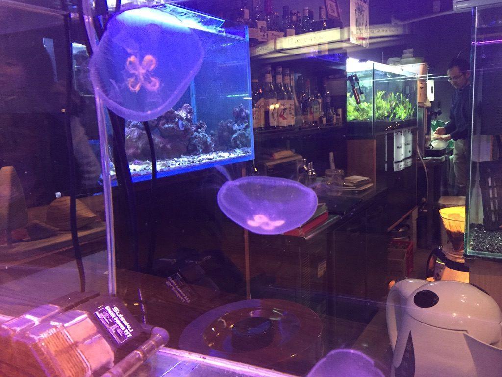近藤熱帯魚店 店内2