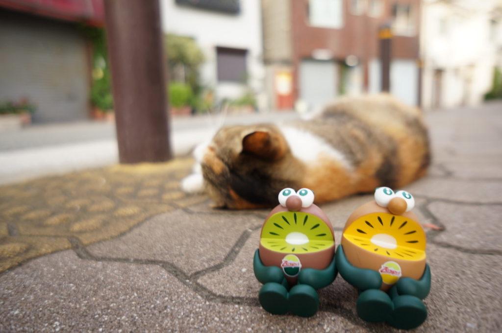 キウイブラザーズと地域猫(奥にうっすら見えるのがニューマコさんです)