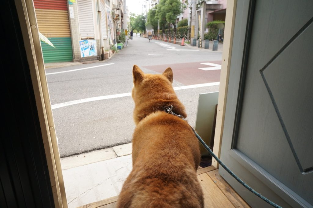 㐂八 柴犬のしーちゃん