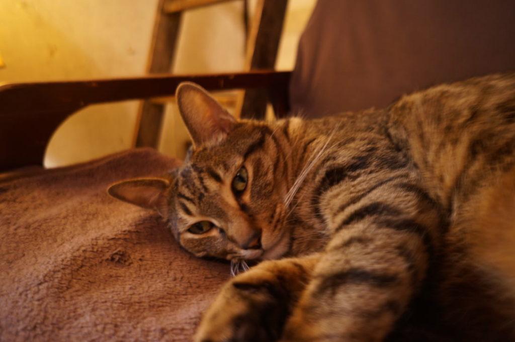 旧ヤム邸の看板猫