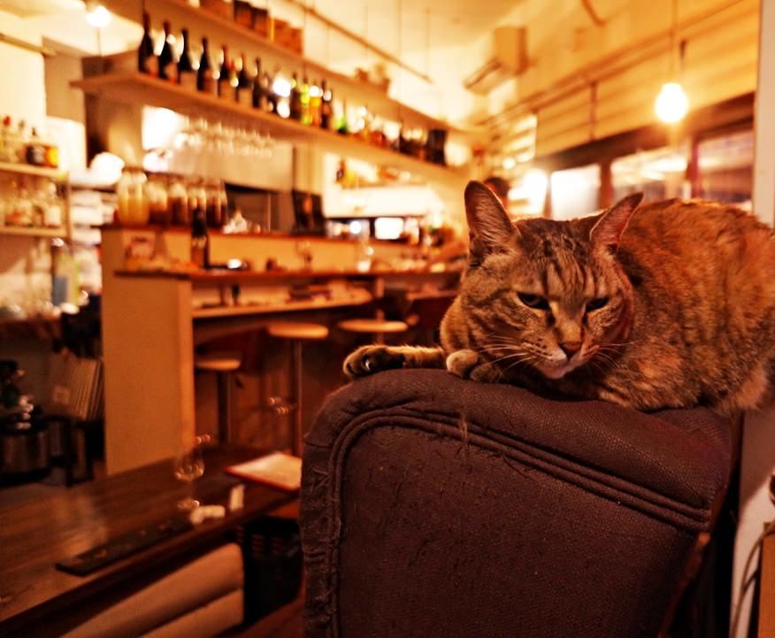 ビストロ ア ラ メゾン フランソワの看板猫