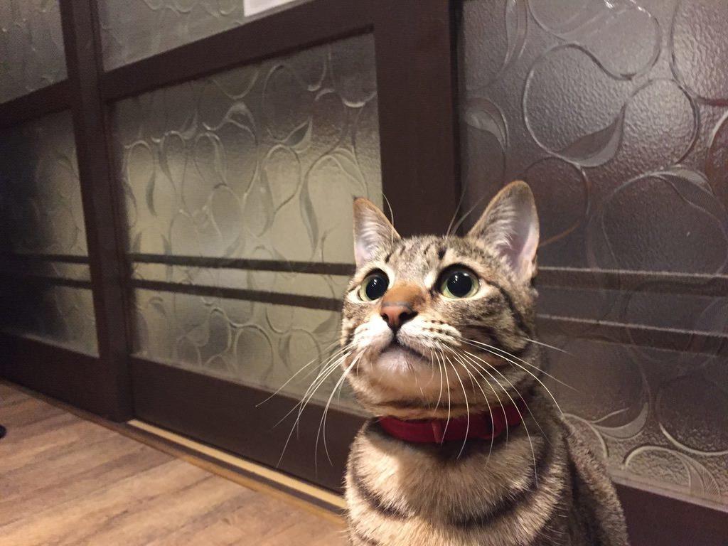 㐂助の看板猫