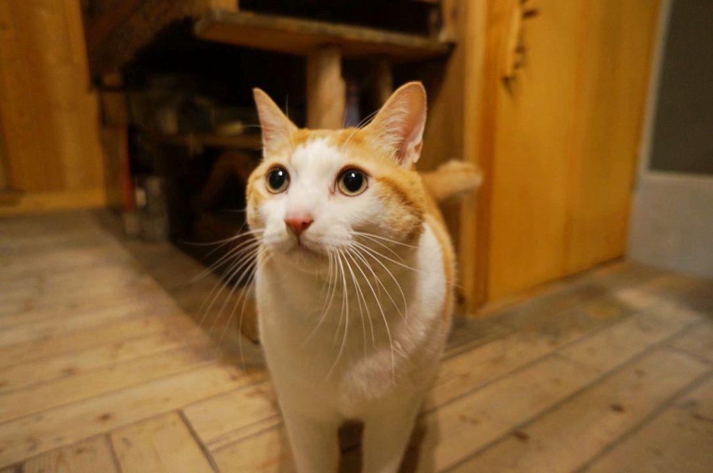 ねこ陣の看板猫