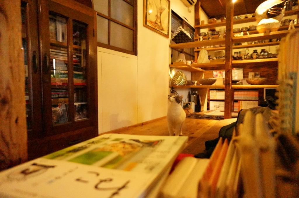チャイ工房の看板猫