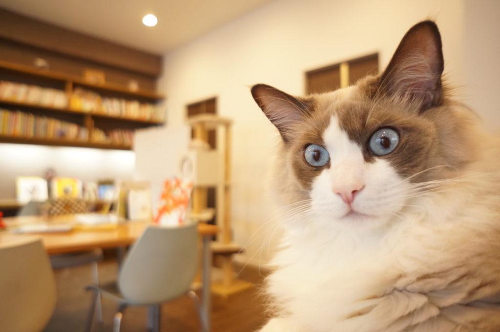 小さなお庭と猫の図書館の看板猫