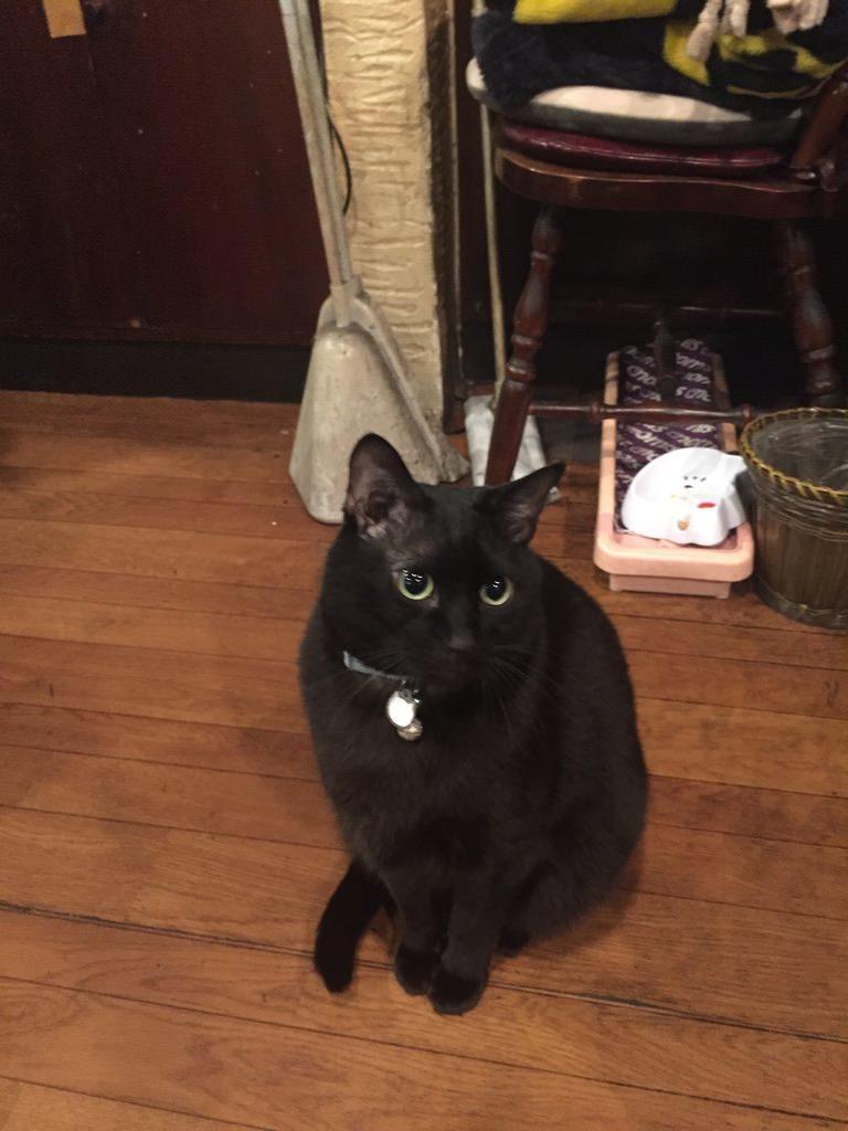 珈琲館サモアの看板猫