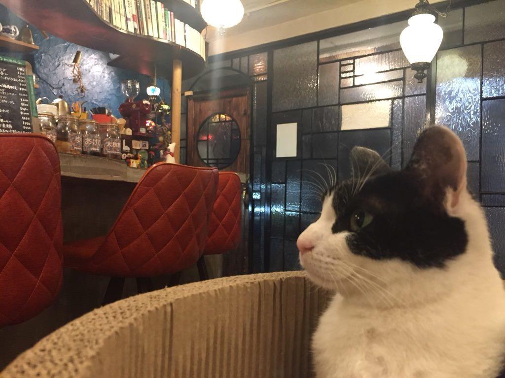 ンケリコ食堂の看板猫