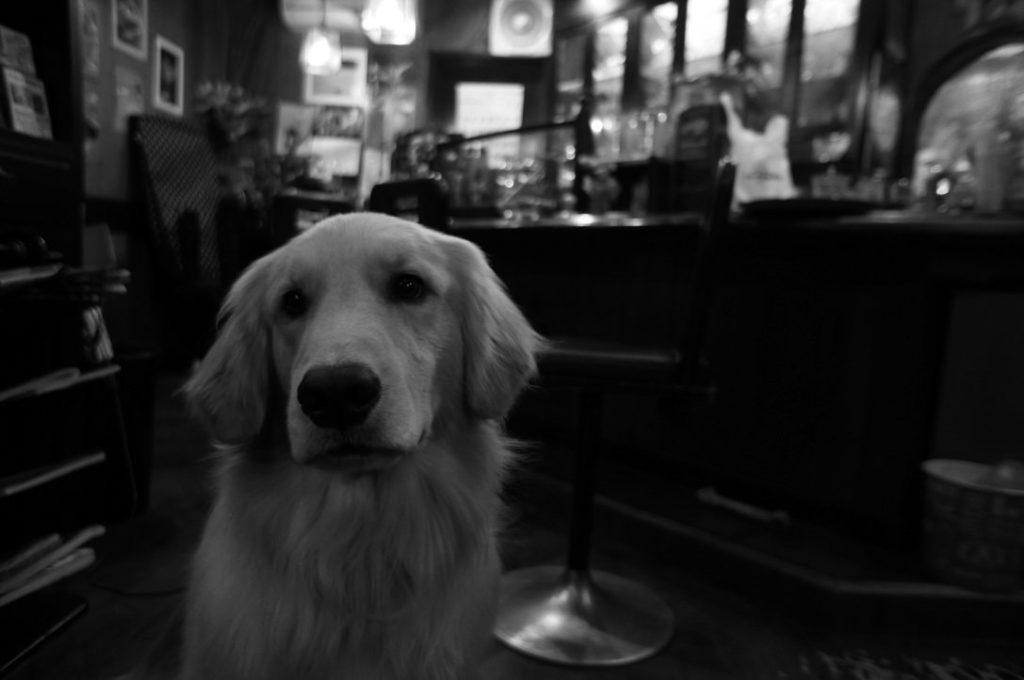 ワンアップの看板犬